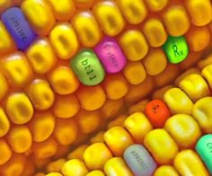 Bought: Updated Info on Your Food, Medicine, Vaccines, Your Health - FREE online screening Sept. 16-27, 2015 Exposes Ugly Truth Behind Vaccines, GMO's and Big Pharma