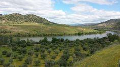 Douro River 2014