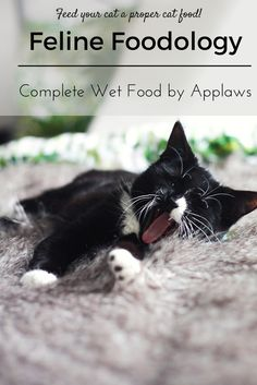 Feline Foodology: Complete wet food by Applaws  Cityscape Bliss // Naughty Felines