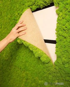 The Living Wall Reindeer Moss Tile Green is made of one hundred percent natural reindeer moss. It can be used on any vertical surface, giving a touch of nature indoors by creating unique interior design spaces. Get a sample today! Vegetal Concept, Banco Exterior, Island Moos, Wall Design, House Design, Design Tape, Fence Design, Garden Design, Plant Wall