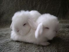Cotton Ball Bunnies/I think they look like lambs.
