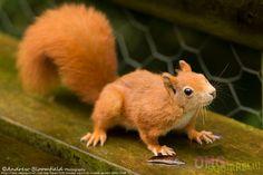 Sunday Squirrel Round-Up: Nov 16th, 2014