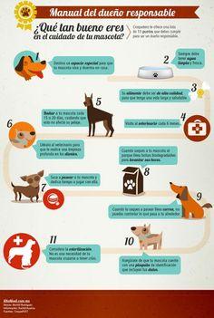Cuidas a tu mascota en 11 pasos