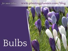 Planting bulbs is one of the easiest ways to start gardening. Check out the bulbs for every season of the year.