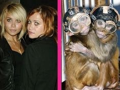 glamrr : : sensual . sassy . seductive: While some celebrities act like animals, others look like animals…