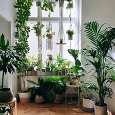 Urban Jungle Bloggers™ (@urbanjungleblog) • Instagram photos and videos