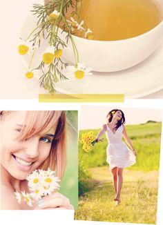 springtime and daisies