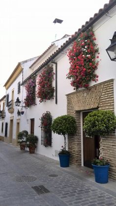 Calle Postrera, barrio de San Basilio, preparado para la fiesta de Los Patios