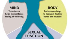 """Testosterone is a steroid hormone that is may be produced by your body or injected into you.  It is developed in the testes, ovaries, and the adrenal cortex.  Testosterone is what develops male characteristics. The more testosterone you may have, the more """"manly"""" you are said to become.  Testosterone has many primary functions in the body. It's associated with a sex drive,  bone density, muscle mass, fat storage and your mood."""