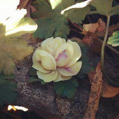 Handmade Organic Wax Aromatic Rose Rose Oil, Succulents, Wax, Organic, Flowers, Plants, Handmade, Hand Made, Succulent Plants