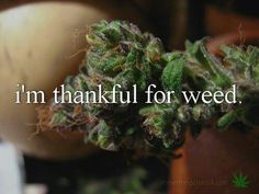 ...for helping me sleep last night when my stomach hurt.. thank you cannabis *claps*