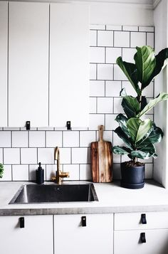 Monochrome kitchen with plants