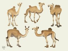 Egyptic by Beats Antique. Camel character design.