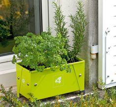 Jardin : cultivez des aromatiques ! Faciles à cultiver, les aromatiques peuvent s'installer partout, aussi bien au potager que dans les massifs ou les bacs des jardinières. Zoom sur quelques indispensables...
