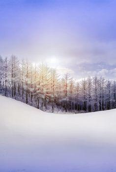 Traantjes mist smelten zich vast aan kille takken.Een vurig weerzien. ( Jan Mortier ) Winter