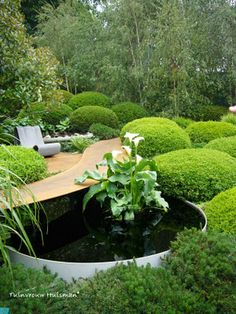 Loving those buxus balls - Chelsea Flower Show 2011 Irish Sky Garden