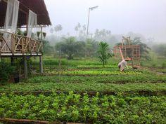 บ้านไร่ ไออรุณ  baan rai i arun Hut House, Farm House, Tiny House, Bahay Kubo, Forest Cottage, Eco Buildings, Jungle House, Farm Stay, Garden Yard Ideas