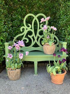 Container Plants, Container Gardening, Conservatory Dining Room, Landscape Design, Garden Design, Dinosaur Garden, Spring Home, Garden Ornaments, Garden Gates
