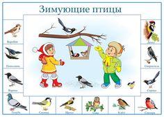 Зимующие птицы. Плакат для дошкольников: