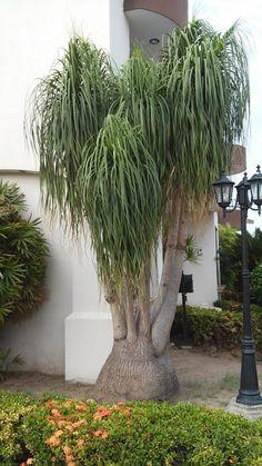 M s de 1000 im genes sobre plantas en pinterest cactus for Suculentas santiago