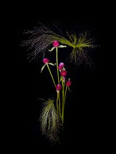 »Flowerwork« from The Plant Journal. A photographic series of flowers arranged in the style of fireworks by Sarah Illenberger and Sabrina Rynas #flower #contemporary #art