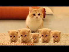 「かわいい猫」 笑わないようにしようとしてください - 最も面白い猫の映画 #157 - YouTube