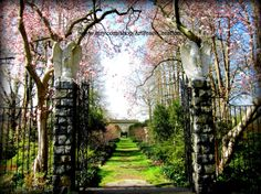 Magnolia Gateway  spring pink magnolia blossom by ArtPeaceCreation, $27.00