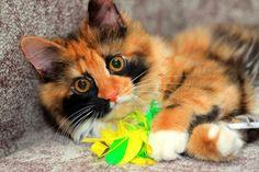 It seems simple at first glance, but playing with your cat is a bit more complicated than you might think. The way you play with her now will set the stage for the strength of your bond and encourage her to play in ways that don't hurt you or other people. It's also good for her mental and physical health.
