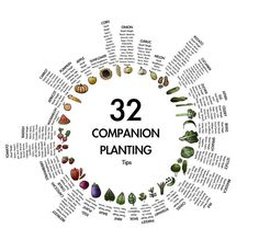 Image result for three sisters planting layout