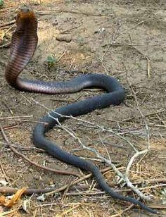 Top 10 Deadliest Venomous Animals