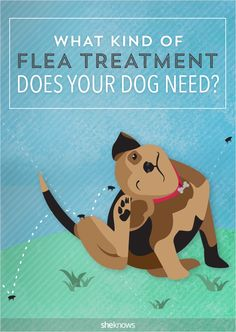 Spring is here and so are the fleas — are you and your pets ready? #FleaTreatment #Dogs