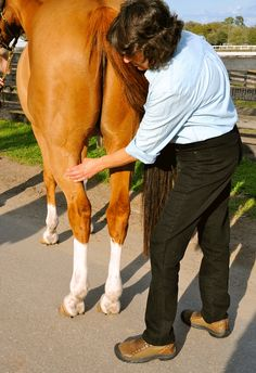 Tightness in a horse's hind-end muscle can affect performance. A top equine sports massage therapist explains how to recognize and fix it. Equine Massage Therapy, Sports Massage Therapist, Horse Therapy, Horse Magazine, Horse Care Tips, Horse Anatomy, Barrel Horse, Appaloosa Horses, Horse Training