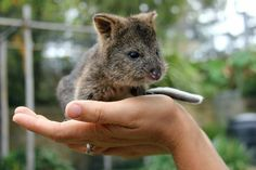 "Her very important job will be ""meeting and helping children learn about the importance of looking after native wildlife,"" the zoo said. 