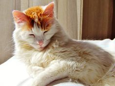 time to shift position Positivity, Cats, Animals, Gatos, Animales, Kitty Cats, Animaux, Cat, Animal