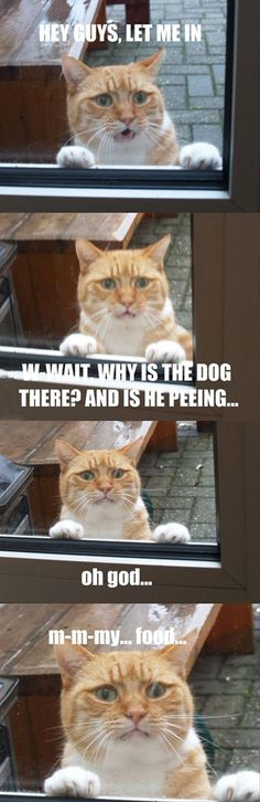 dog is peeing on the cat food, funny cat pictures