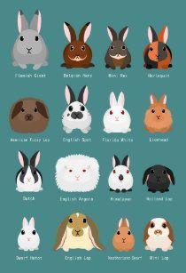 Diy Bunny Cage, Bunny Cages, Diy Bunny Toys, Indoor Rabbit Cages, Diy Toys For Rabbits, Indoor Bunny House, Rabbit Hutch Indoor, Rabbit Toys, Pet Rabbit