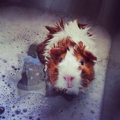 Soggy piggy! Look at that little face