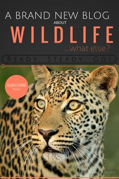 So we've decided to start our very own blog to share all the incredible wildlife experiences with you, our readers. Just like our name says it, we've been so fortunate and blessed to have wildlife sightings and photo opportunities in excess (inXS Wildlife). Be sure to follow our blog and experience our wildlife adventures first hand. #wildlife #wildlifephotography #inxswildlife #wildlifeblog #wildlifeartist Wildlife Photography Tips, African Safari, News Blog, The Incredibles, Blessed
