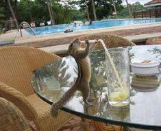 Gimme a sip