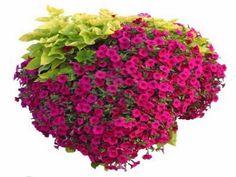 asian hanging plants | Design Of Hanging Basket Flowers Hanging Plant' Plastic Hanging ...