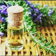 #newblogpost Benefits of Rosemary Essential Oil is up on my website www.makeupadda.com . . . . . . Click the link from my bio to read the blog.... . . . #skincare #haircare #indianblogger #blogger ✍✍ #likeforlikeback #igmakeup #shoutoutforshoutout  #instamakeup #instafollow #l4l  #tagforlikes #followback #followforfollow #follow4follow #instablogger #productreviewer #productreview #instagood #tbt  #photooftheday  #followme #likeforlike #femaleblogger #fbloggersindia  #productreviewoftheday…