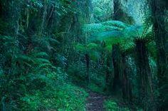 Risultati immagini per foto giungla amazzonica