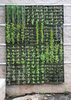 Google Image Result for http://www.urbanfarmonline.com/images/news/ihs-vertical-garden_250.jpg