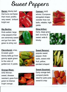 Arten von Paprika - Yahoo Image Search Results - Grow [your] Food - Pfeffer Fruit And Veg, Fruits And Veggies, Growing Vegetables, Types Of Peppers, Foods With Iron, Tomato Farming, Pepper Plants, Food Charts, Heirloom Tomatoes