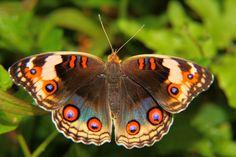 Amazon+Rainforest+Butterflies | Photograph The Rainforest Butterfly by Rusyadi Aulianur on 500px