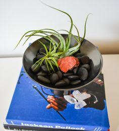 Minimalist Dish Air Plant Terrarium by TheModimalist on Etsy