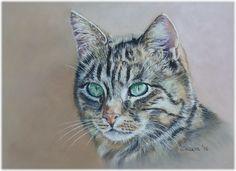 sweet *Emmy* Europäische Kurzhaar Katze - European Shorthair Cat - Auftragsarbeit - commissioned work -  / Soft Pastel