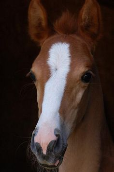 who doesn't love a chestnut foal?