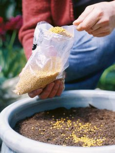 Fertilizing container plants - For most of its life, a container plant will depend on you to fertilize it in the growing season to ensure a good supply of flowers and strong growth.