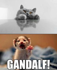 The fall of Gandalf the Grey. Funny Shit, Funny Animal Memes, Cute Funny Animals, Funny Animal Pictures, Funny Cute, Funniest Animals, That's Hilarious, Freaking Hilarious, Gandalf